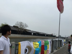 運河沿いにこいのぼりを飾りに行きました
